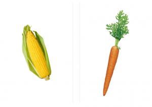 flashcard-corn