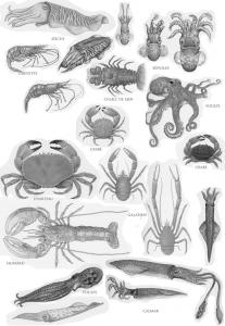 mollusques.small